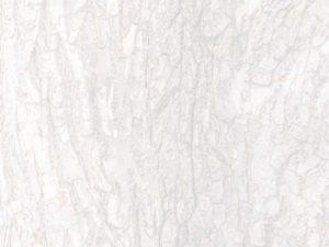 A+ Tree & Crane Service - White Tree Bark Background