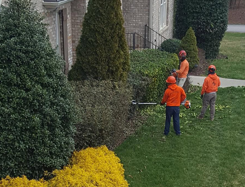 A+ Tree Services Tree Trimming