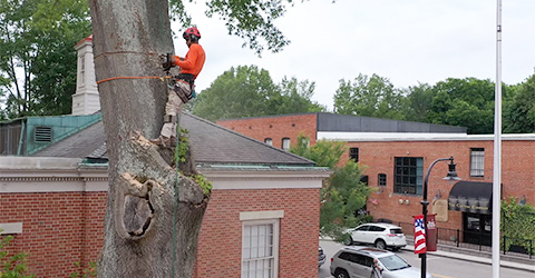 A + Tree & Crane Services   Tree Removal