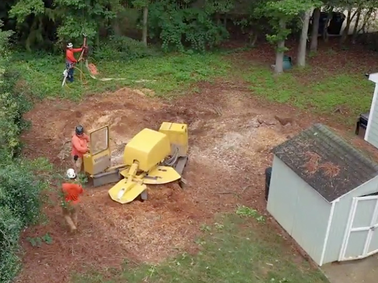 A+ Tree & Crane Services | Stump Grinding