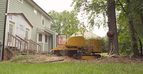 A + Tree & Crane Services | Stump Grinding