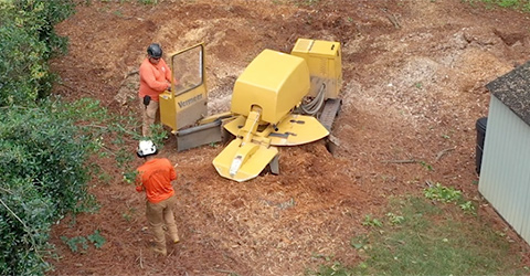 A + Tree & Crane Services | Stump Grinding