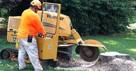 A+TreeServices-Stump-Grinding-06