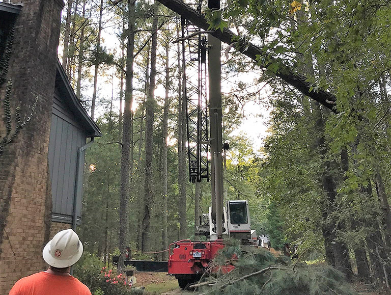 A+ Tree Services Tree Removal