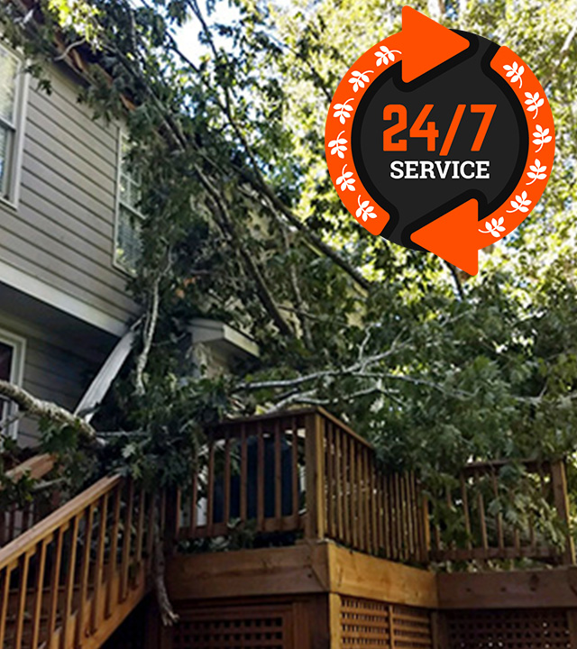 A Plus Tree & Crane Emergency Services